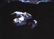 Чужой / Alien (Сигурни Уивер, 1979)  54be0b330370392