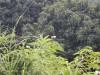 Hiking 2012 June 16 - 頁 2 515d44338538666