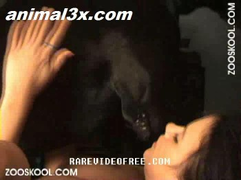 0309c1351231193 Zooskool   Stray X   Sugar Dane EXCELLENT missionary dogfuc